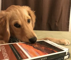 Luna on Books